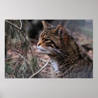 Wildcat Contentment 2 print