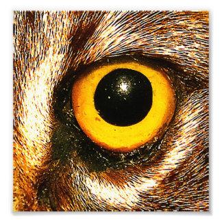 Wildcat Eye Close Up Art Photo