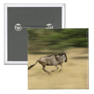 Wildebeest in motion, Connochaetes taurinus, 15 Cm Square Badge