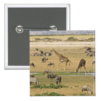 Wildebeests, Zebras and Giraffes gather at a 15 Cm Square Badge