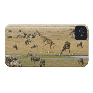 Wildebeests, Zebras and Giraffes gather at a iPhone 4 Case-Mate Cases