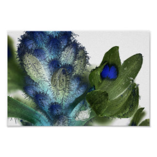 Wildflower 2, Ultraviolet Photography Poster