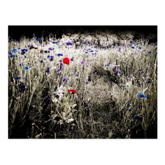 Wildflower Color Isolation Postcard