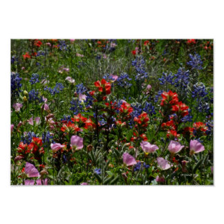 Wildflower Dreams Poster