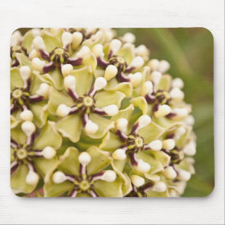 wildflower mousepads