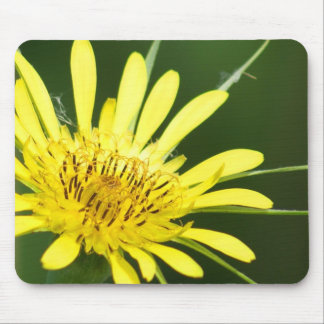 Wildflower Mouse Mats