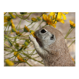 Wildflower Snack Postcard