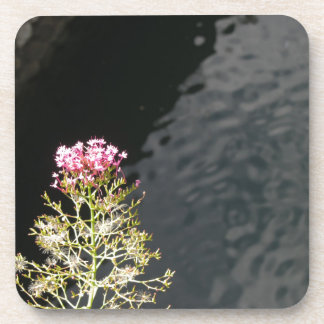 Wildflowers against the water surface of a river coaster