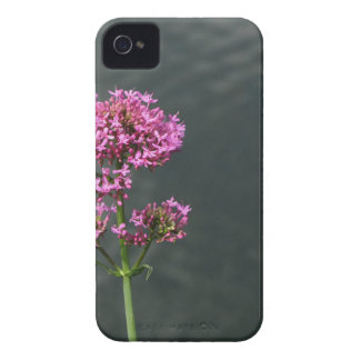 Wildflowers against the water surface of a river iPhone 4 cases