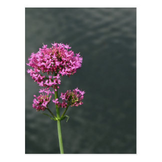 Wildflowers against the water surface of a river postcard