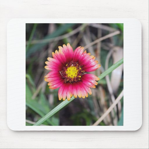 Wildflowers at the Beach Mouse Pads