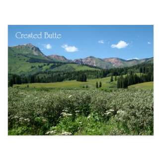 Wildflowers in Crested Butte Postcard