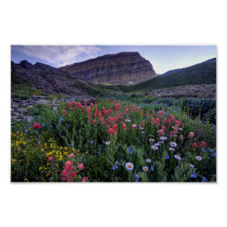 Wildflowers in High Mountain Meadow - Utah Poster