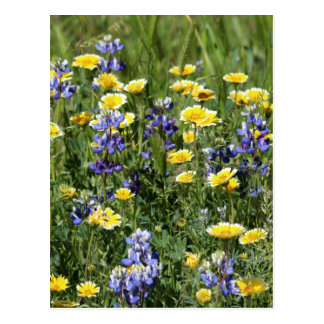 Wildflowers in Purple and Yellow Postcard