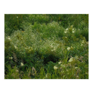 Wildflowers. In the grass Photo Print