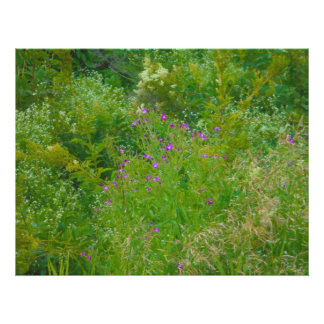 Wildflowers. In the grass Photographic Print