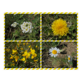 Wildflowers in yellow poster