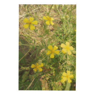Wildflowers in yellow wood prints