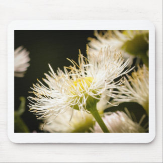 Wildflowers Mouse Pads