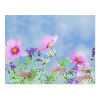Wildflowers, Nature's Beauty Postcard