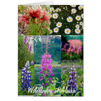 Wildflowers of Alaska Card