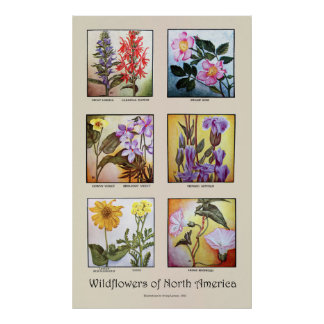 Wildflowers of North America [A] Poster
