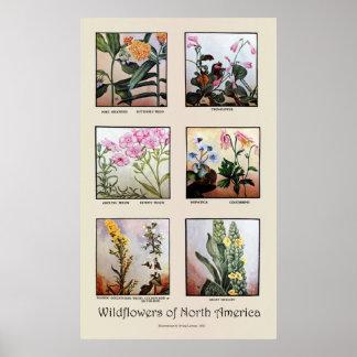 Wildflowers of North America [C] Poster