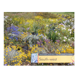 Wildflowers of Western Australia Postcard