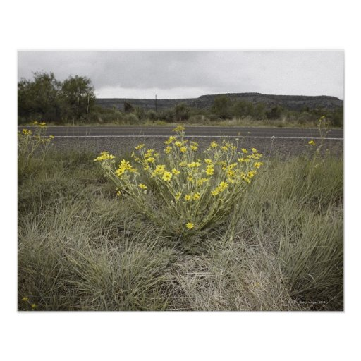 Wildflowers on the Side of the Road, Highway 90, Poster