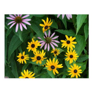 Wildflowers Postcard