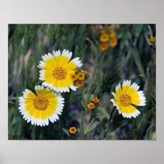 Wildflowers Yellow and White Sunflowers Poster