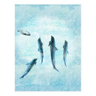 wildlife aquatic, dancing dolphins post cards