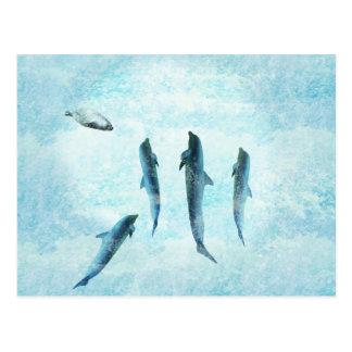 wildlife aquatic, dancing dolphins postcard