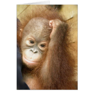 Wildlife Baby Orangutan (version 2) Card