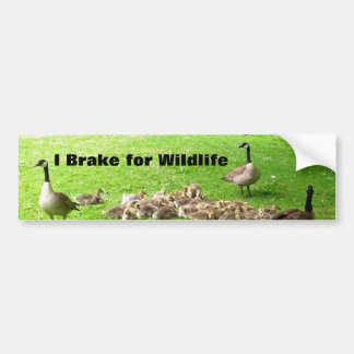 Wildlife Bumper Sticker