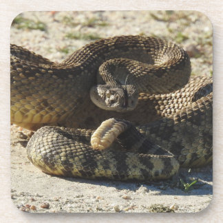 Wildlife coasters, set of 6, snakes, rattlesnake coaster