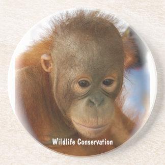Wildlife Conservation Sandstone Coaster