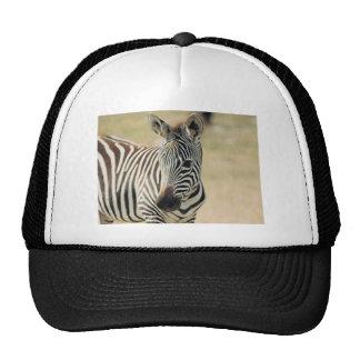 WILDLIFE MESH HAT