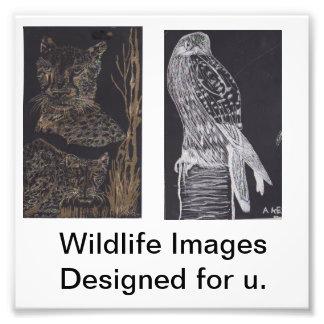 Wildlife Images Photograph