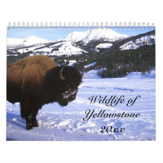 Wildlife of Yellowstone Wall Calendar