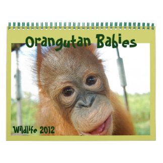 Wildlife Orangutan Babies Calendars