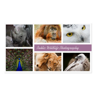 Wildlife Photography Photographers Business Card