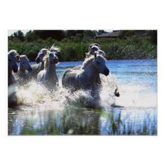 Wildlife Photography Wild Horses Poster 18x24