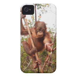Wildlife Rescue Mason Orangutan iPhone 4 Case