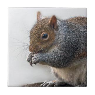wildlife  Squirrel Ceramic Tile