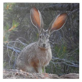 Wildlife tile, ceramic, rabbits, jackrabbit ceramic tile