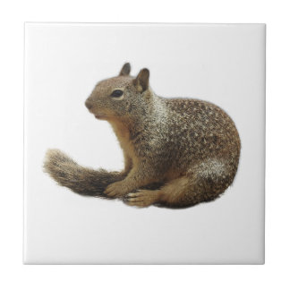 Wildlife tile, ceramic, wild animals, squirrel tile
