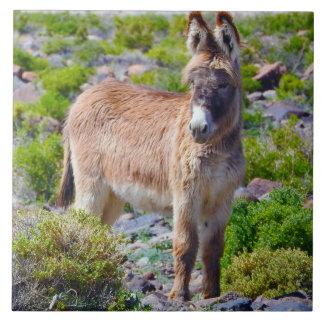 Wildlife tile, ceramic, wild burros, donkey ceramic tile