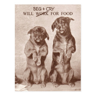 Will Beg & Cry for Food Postcard