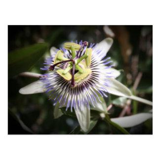 will passiflora, flower, mylifeisart postcard